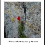 Red Flower growing in a rock